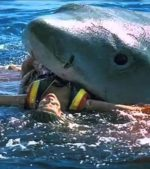 Bikini-Model-Shark-Attack-Off-Bondi-Beach-Australia-Real-Or-Fake