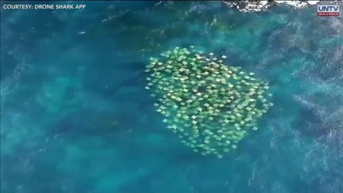 Unbelievable-footage-of-a-massive-school-of-stingrays-in-Australia
