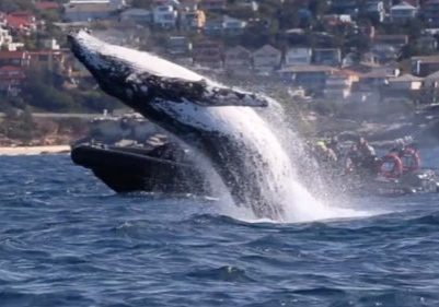 Amazing-Whale-Breach-Shocks-Tourists-At-Bondi-Beach